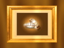 Royalty Free Video of Wedding Rings in a Frame