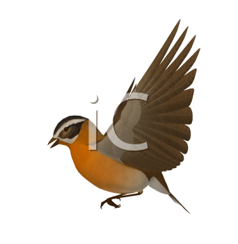 Royalty Free Clipart Image of a Bird