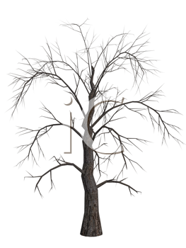 Royalty Free Clipart Image of a Dead Tree