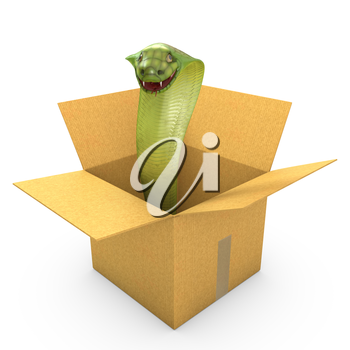 Green cobra in a carton box, isolated on white background