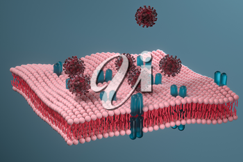 Cell membrane and coronavirus, medical concept, 3d rendering. Computer digital drawing.