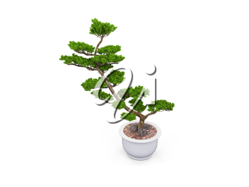 Royalty Free Clipart Image of a Bonsai Tree