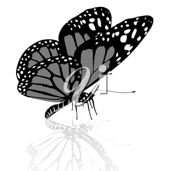 Black and white beautiful butterfly. High quality rendering