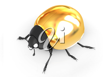 golden beetle on a white background