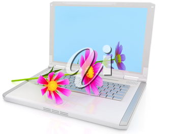 cosmos flower on laptop on a white background