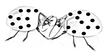 Ladybirds on a white background