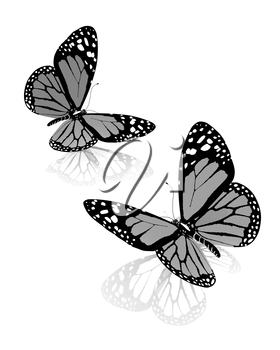 Black and white beautiful butterflys. High quality rendering