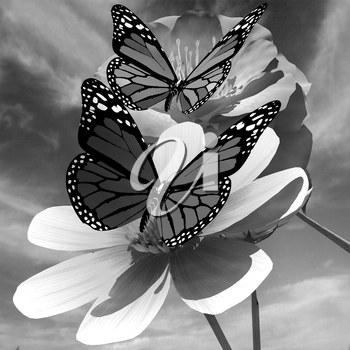 Beautiful Flower and butterfly against the sky