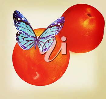 Blue butterflys on a fresh peaches on a white background . 3D illustration. Vintage style.