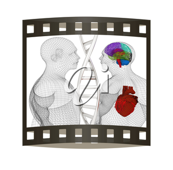 3D medical background with DNA strands and wire human body model with heart and brain in x-ray. 3d render. Film strip.