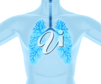 Clean and healthy lungs.3D illustration