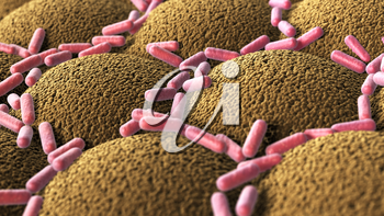 Bacteria on the microvilli surface of digestive system. 3D illustration