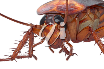 Cockroach bug brown roach with small head, close view. 3D rendering