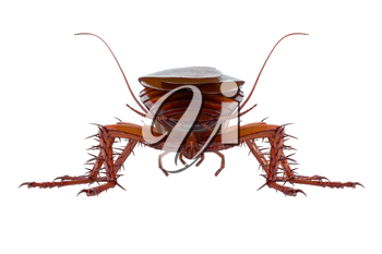 Cockroach bug brown small and shiny beetle, back view. 3D rendering