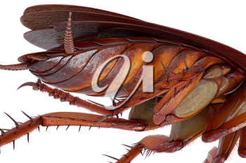 Cockroach bug with orange and brown body, close view. 3D rendering