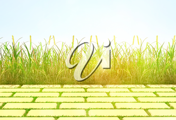 background, grass and tile.