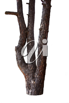 Tree Trunk Isolated On White Background. For Copy Space, Arrows ,Signs, Signposts and Directions